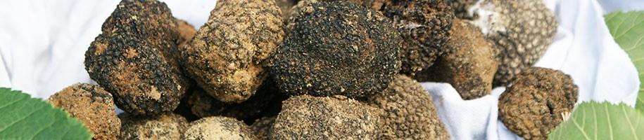 Truffes - Les truffes de Christian